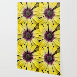 Yellow Calendula Wallpaper