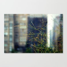 Wisps of Weeds in the City Canvas Print