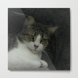 through the looking glass - cat meditating at the window Metal Print