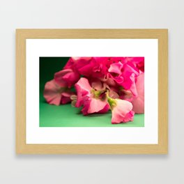Lathyrus V Framed Art Print
