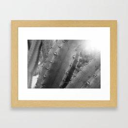 Kaktus #4 / b&w Framed Art Print