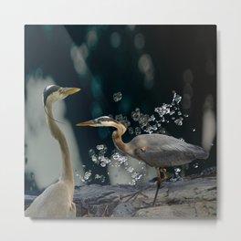 Great blue herons Metal Print
