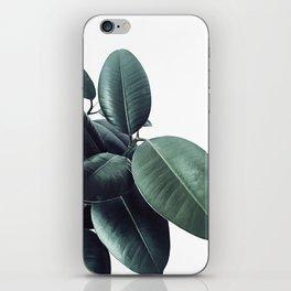 Ficus Elastica #18 #White #foliage #decor #art #society6 iPhone Skin