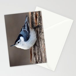 Upside Down Nuthatch Stationery Cards