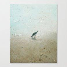 Lil Sandpiper Canvas Print
