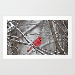 Quiet Time in the Snowy Woods Art Print