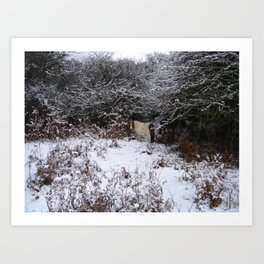 New Forest pony in the snow Art Print