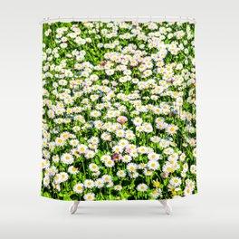 Field of daisy flowers Shower Curtain