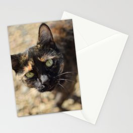 A wild calico Stationery Cards