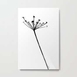 Antriscus Sylvestris Metal Print