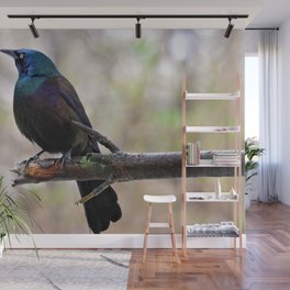 Yonder  (Common Grackle) Wall Mural