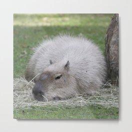 Capybara 215 A Metal Print