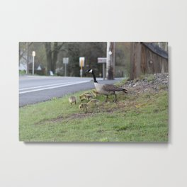 mother goose and her offspring Metal Print