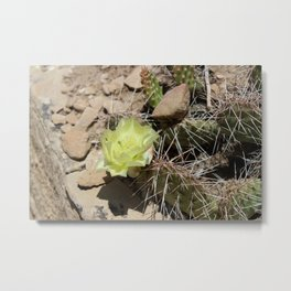 Cactus with Yellow Flower Metal Print