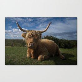 Rugged Highland Cow Canvas Print