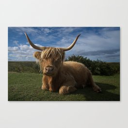Rugged Highland Cow Canvas Print