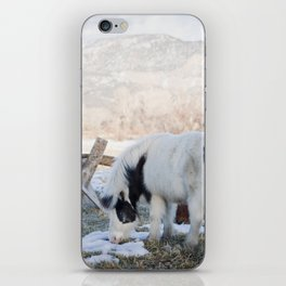 mini horses and a view iPhone Skin