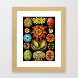 Sea Squirts (Ascidiacea) by Ernst Haeckel Framed Art Print