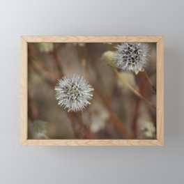 Closeup Of Mature Seed-head Coachella Wildlife Preserve Framed Mini Art Print