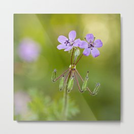"Purple wildflowers ""Erodium malacoides"" Metal Print"