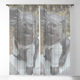 Black and White Pig Statue  Sheer Curtain