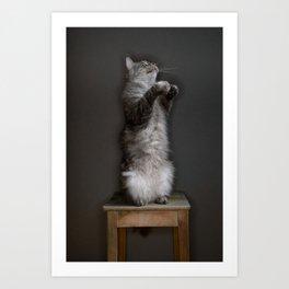 Cat standing Art Print