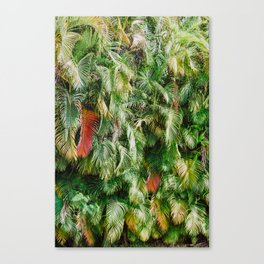 In Love with the Fall in the Tropics Canvas Print