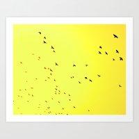 Birds in flight, Delhi. Art Print