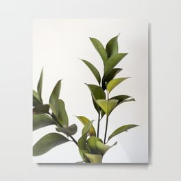 Green Green Leaves Variation | Nature Photography - Plants & Botanicals Metal Print