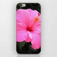 hot pink iPhone & iPod Skins featuring Hot pink by Dyneli