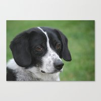 snoopy Canvas Prints featuring Snoopy Lookalike  by Melinda F Schneider