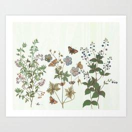 The fragility of living - botanical illustration Art Print