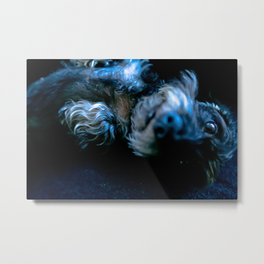 DACKEL DOG #36 Metal Print