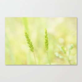 Green and Free Canvas Print