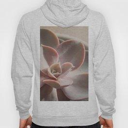 Pink Echeveria #3 Hoody