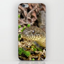 A Snake In The Moss iPhone Skin