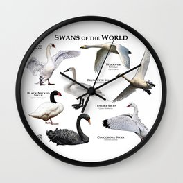 Swans of the World Wall Clock