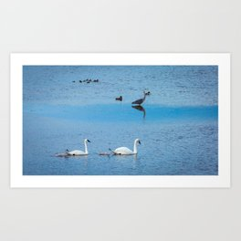 A Family of Swans Swim by a Great Blue Heron at Henrys Lake, Idaho Art Print
