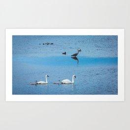 A Family of Swans Swim by a Great Blue Heron at Henrys Lake, Idaho Art Print