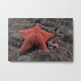 Starfish, (Sea Star)  Metal Print