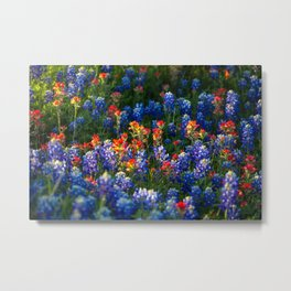 Wonderful Wildflowers - Bluebonnets and Indian Paintbrush on Spring Day in Texas Metal Print