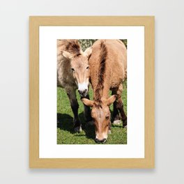 Przewalski Horses Framed Art Print