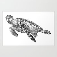 sea turtle Art Prints featuring Sea Turtle by Laura Hines