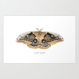 Oculea Silkmoth (Antheraea oculea) Art Print