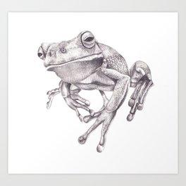 Pencil Drawing - White Lipped Tree Frog Art Print