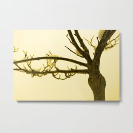 Snow settled on a bare tree Metal Print