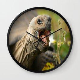 Cute Tortoise Eating - Beautiful Wall Clock