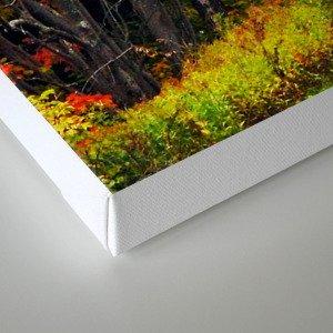 Nature's Secret Highway Canvas Print