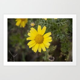 Daisy flower cu yellow Art Print