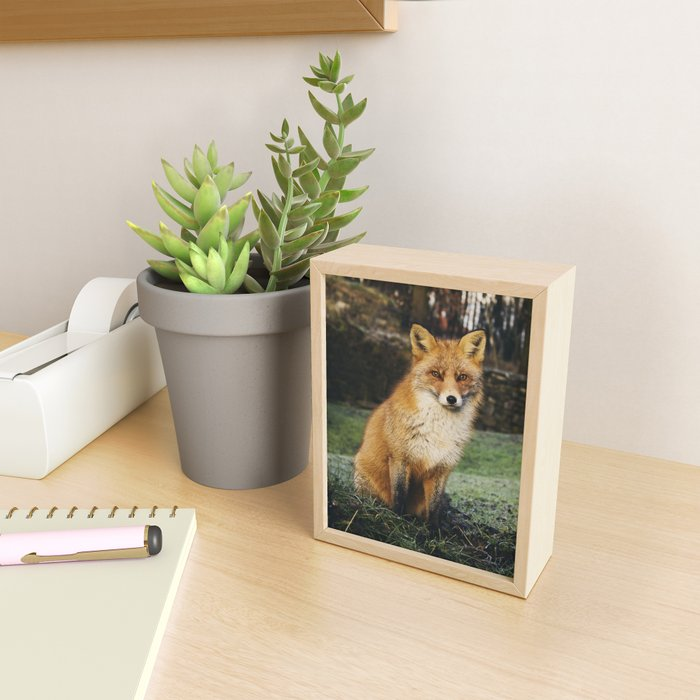 Fox Nature Framed Mini Art Print